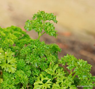 narkabundah-native-plant-nursery (31)