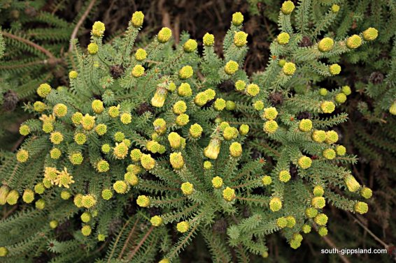 narkabundah-native-plant-nursery (34)