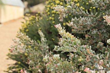 narkabundah-native-plant-nursery (35)