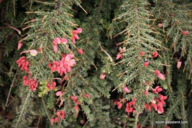 narkabundah-native-plant-nursery (38)