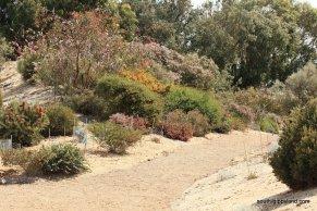 narkabundah-native-plant-nursery (59)