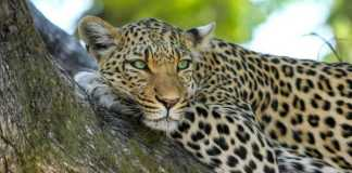 Best Places to See the Big 5 in South Africa