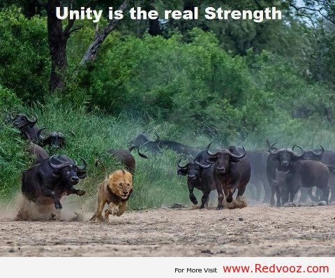 Unity Is Strength South Africa Today