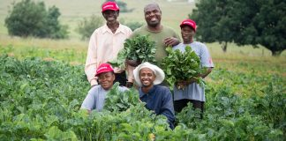 Peter Moyo (centre) with the four garden workers employed by the Kransvley Farmers' Cooperative to ensure a good harvest of indigenous vegetables like Okra.