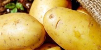 The lash of lockdown: a potato farmer's story