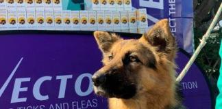 First three animal welfare organisations welcome Bravecto® donations through #BravectoCares campaign