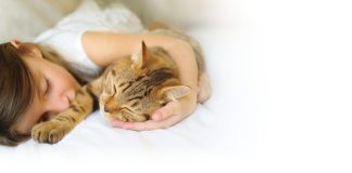 Zoetis launches new 6-in-1 parasiticide to protect the health of cats and kittens