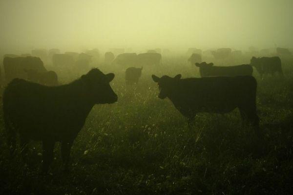 Farm murder of Brendin Horner investigation: 5 cops, 2 animal brokers arrested for stock theft