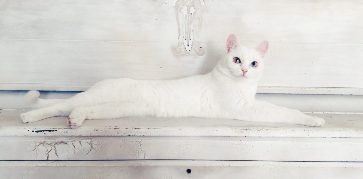 A white cat with one blue eye and one brown eye lies down on a bench.