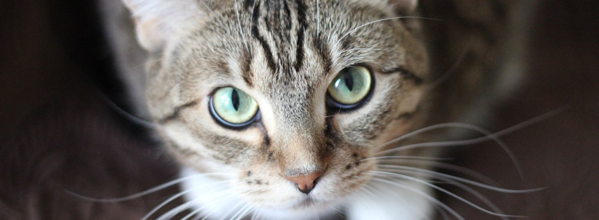 A cute cat look up with big, round eyes at the camera.