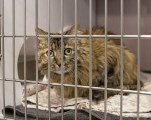 A beautiful kitty awaits treatment at the cat hospital.