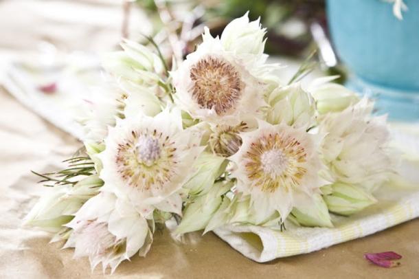 Wedding Flowers: Blushing Bride Protea