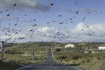 Migrating birds road