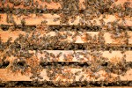 ccd-bee hive