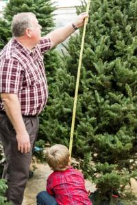 measuring Christmas tree