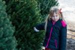 picking Christmas tree