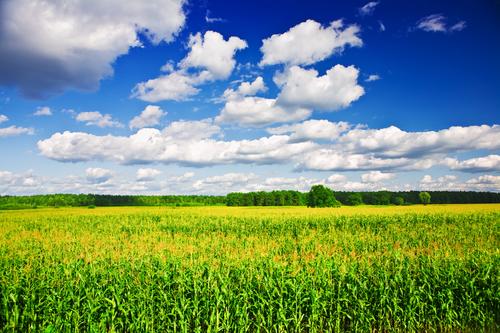 china corn acreage planted