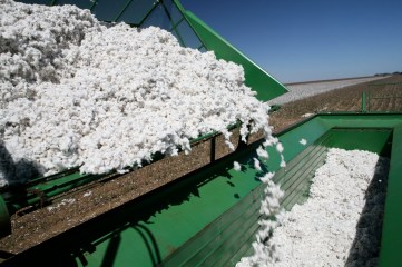 cotton production
