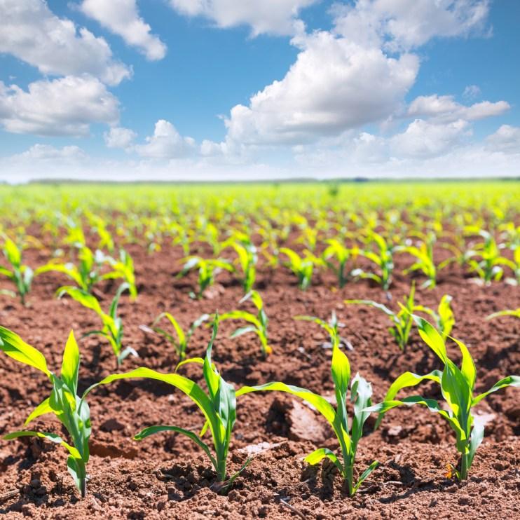 southern region prospective plantings
