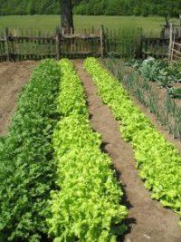 backyard-vegetable-garden-5