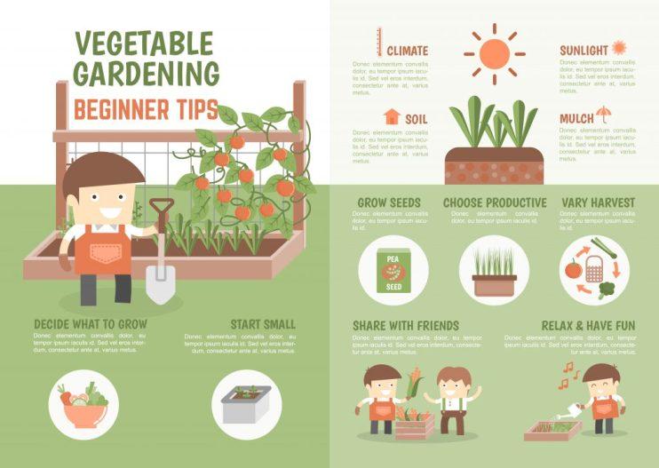 how to grow vegetable beginner tips
