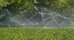 Farm sprinklers in potato field.