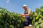 freeze southeastern crops
