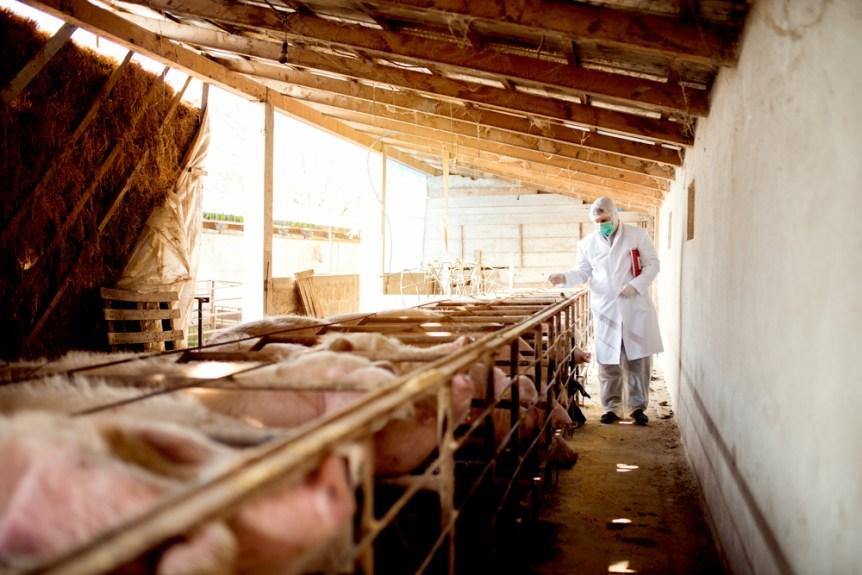 pork market
