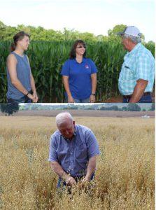 alabama corn planting