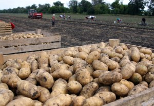 fsma produce