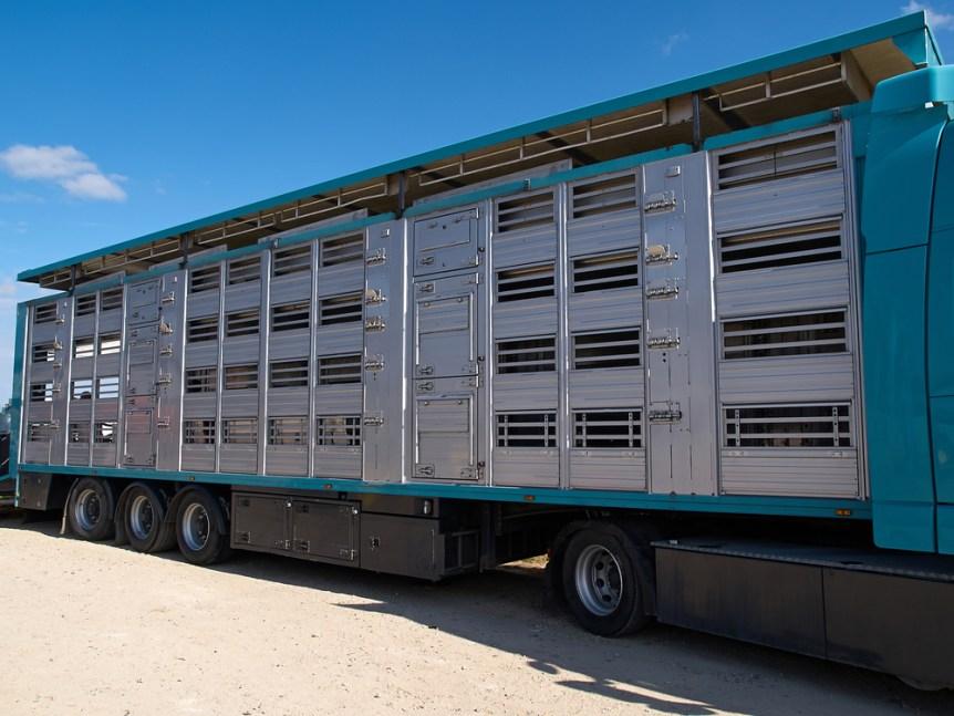 livestock haulers