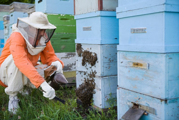 honey bee losses