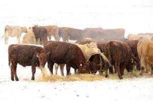 hay shortage