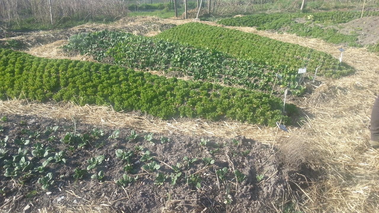 Building Vegetable Garden