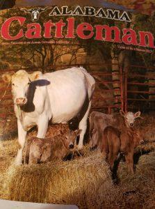 alabama cattleman