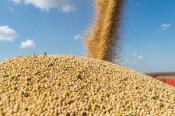 china soybean