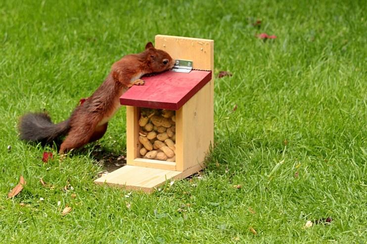 increase peanut