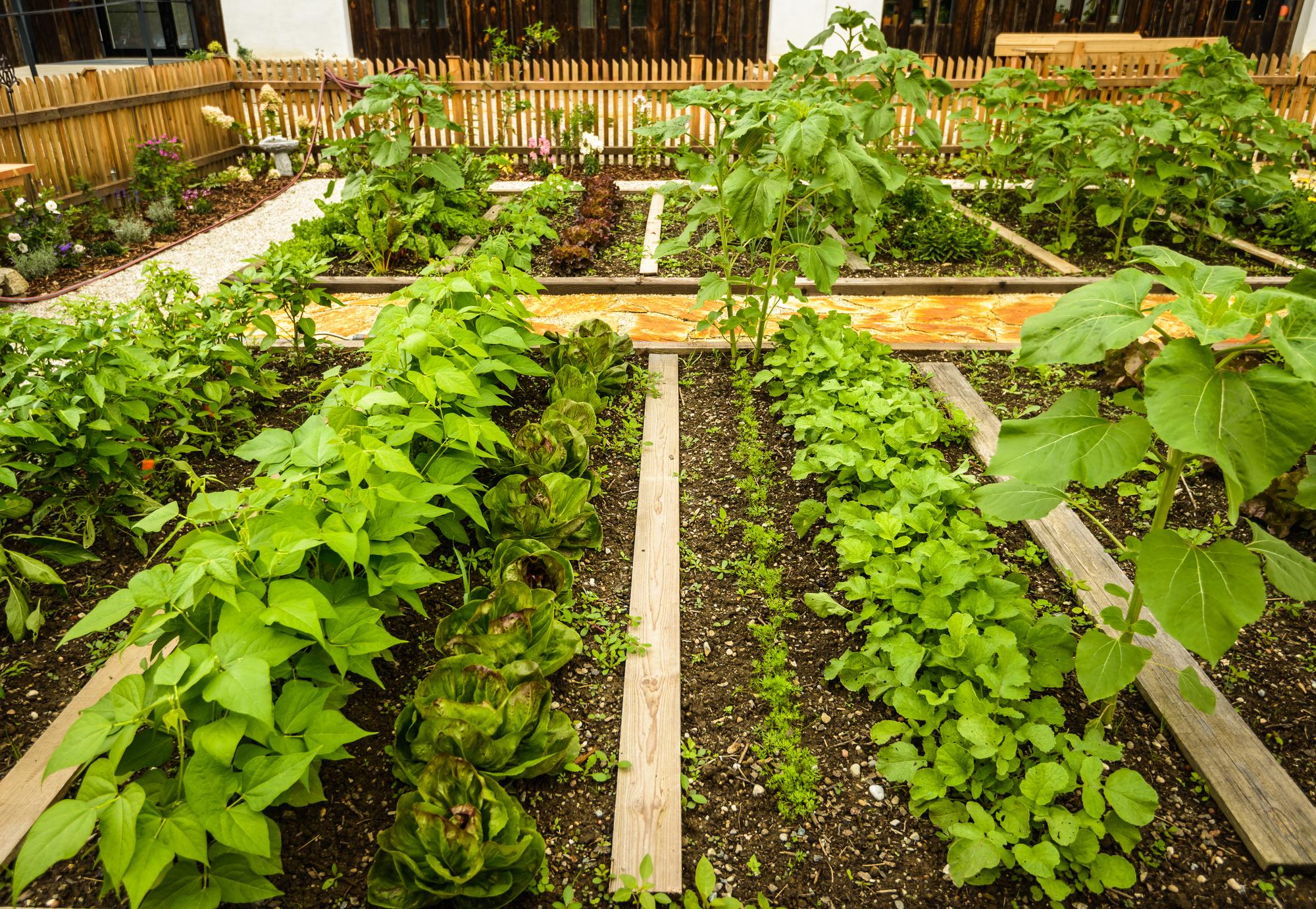 Beginning Gardener Vegetable Garden Layouts Southeast Agnet