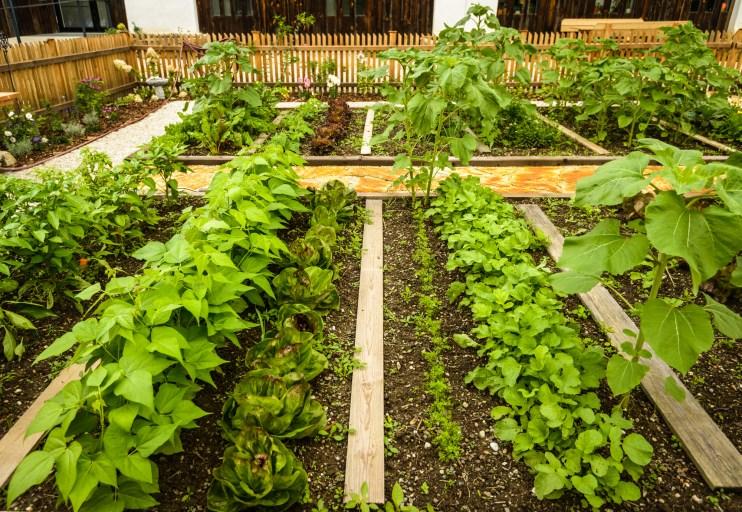 beginning gardener