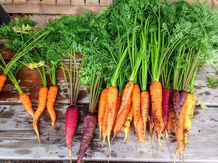 carrot varieties