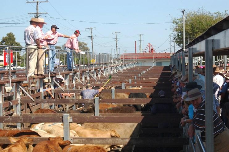 world livestock auctioneer