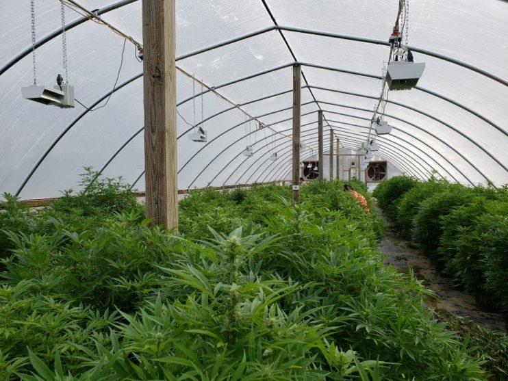hemp growers
