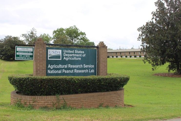peanut research