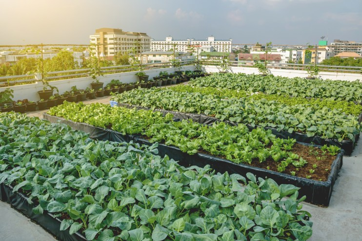 Urban Agriculture Grants and Engagement Opportunities