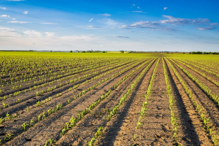 planted acreage