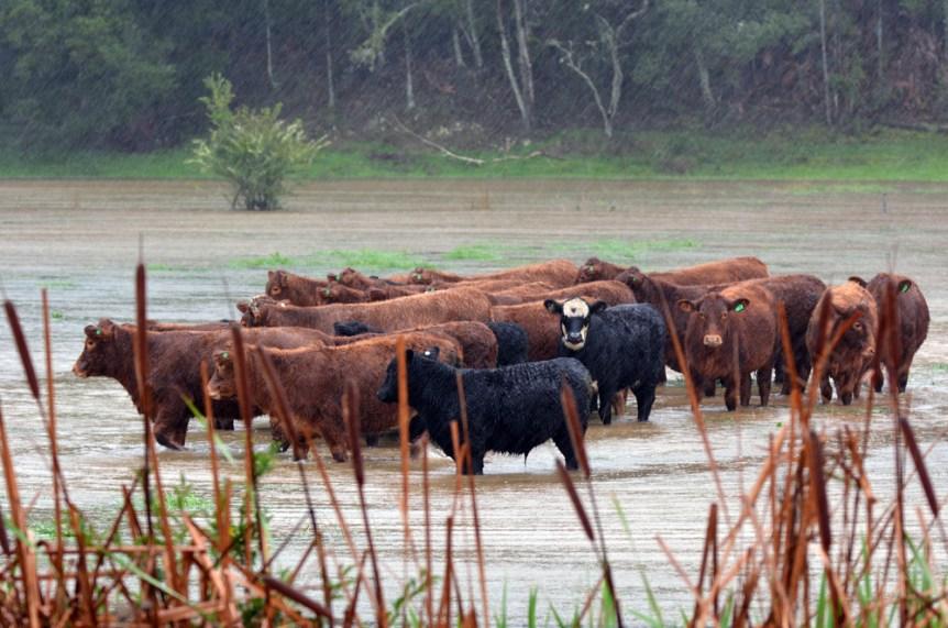 livestock producers