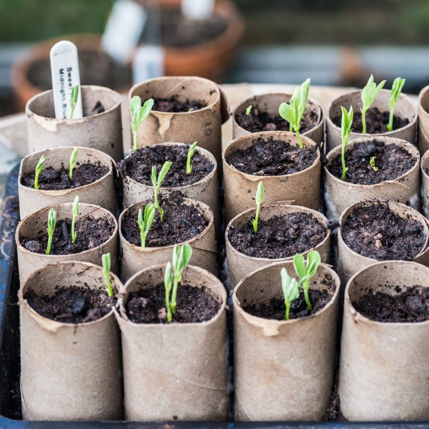 starter seed