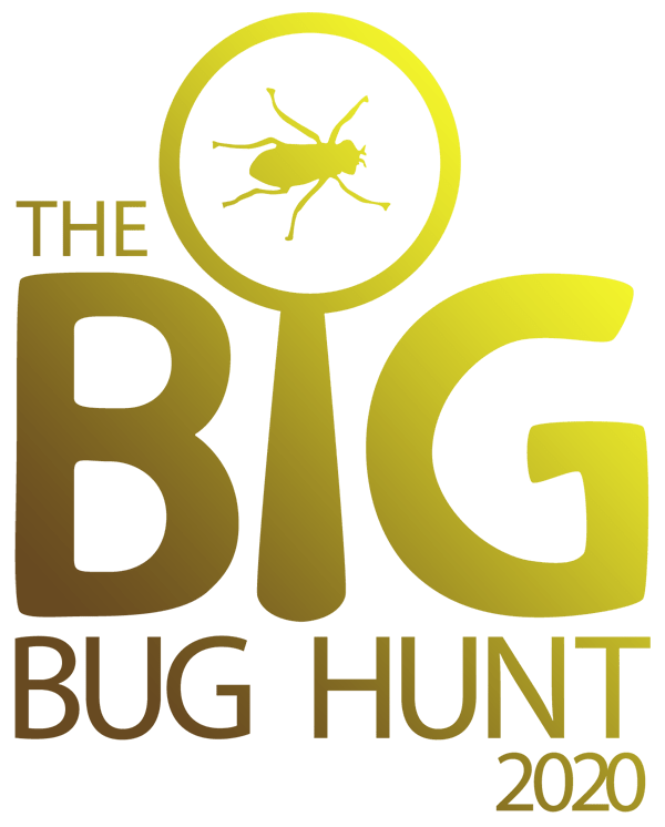 The Big Bug Hunt 2020