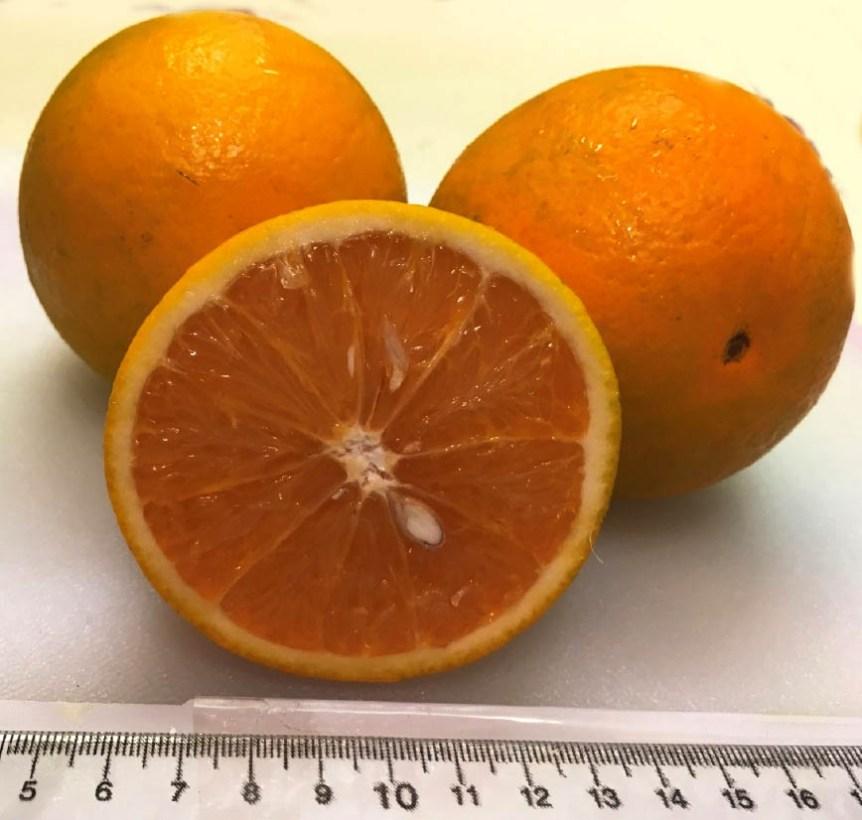 orange cultivars