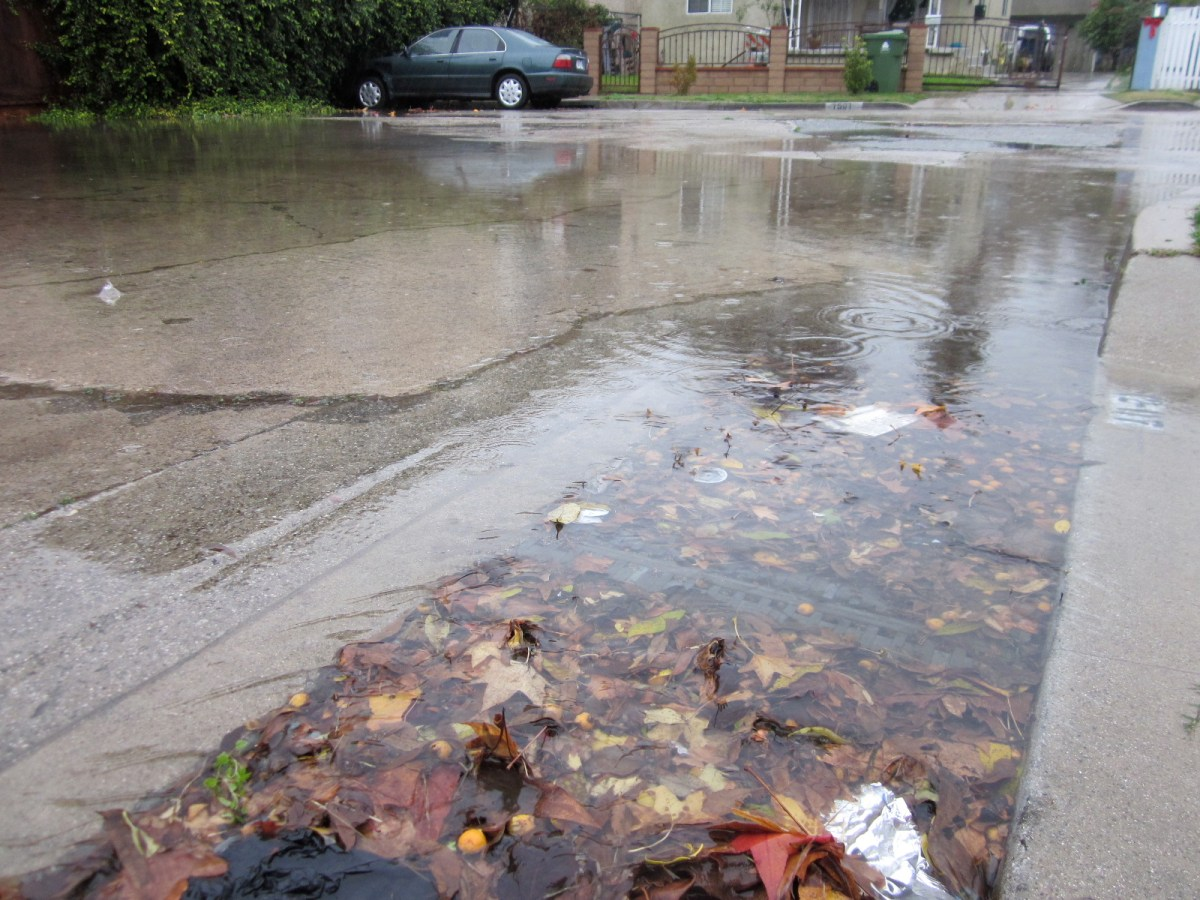 Clear The Drains Of Leaf Debris Southeast Neighbors